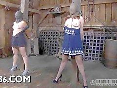 Bailarina precisa selvagem domesticando
