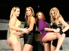 Teen blonde shemales fuck anal doggystyle in wild foursome