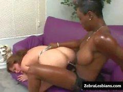 Zebra Girls - Ebony lesbian babes fuck deep strapon toys 07