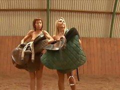 Desnudando com cavalos