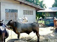 gthai Film 15