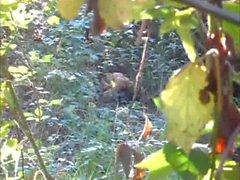 kryssning ... i skogs pt3