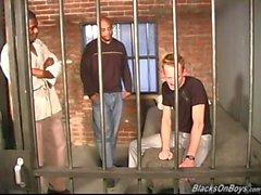 Vitgrabb knullas i fängelse av Blacks