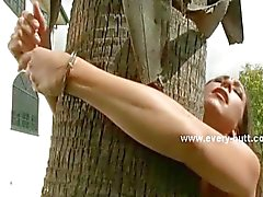 Slave tied outside the house from tree