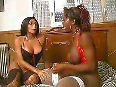 mésanges noir et brune des gros seins Big